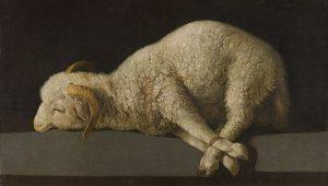 Schilderij van Zubarán met daarop een schaap met de poten aan elkaar vastgebonden.