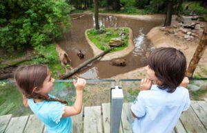 Twee kinderen kijken uit over de beren in Ouwehands Dierenpark.