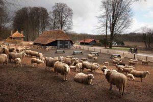Schaapskooi te Hoog Buurlo op de Veluwe